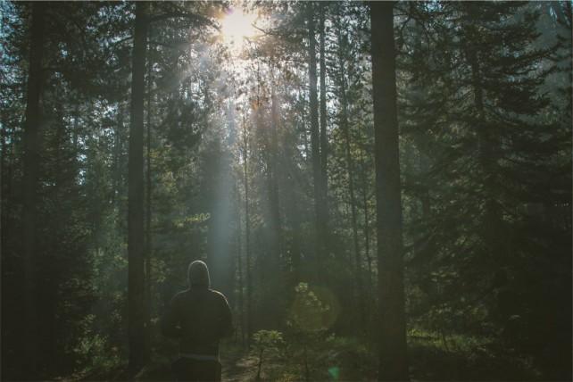 Foto eines dunkleren Waldes, in dem eine joggende Person mit Rücken zur Kamera zu sehen ist.