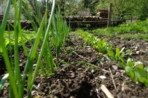 Frühjahrsarbeiten im Garten 1