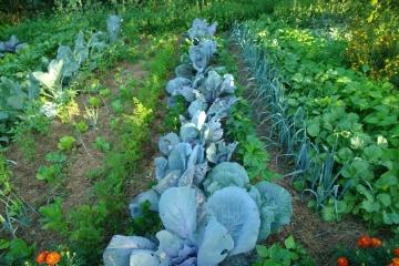 Mischkultur und Kompost-Bau 2
