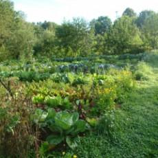 Mischkultur und Kompost-Bau