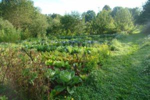 Mischkultur und Kompost-Bau 4