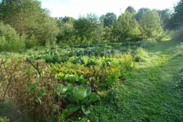 Mischkultur und Kompost-Bau 1