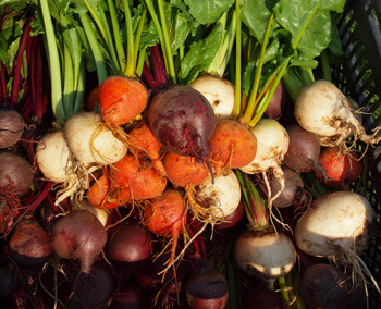 Schluss mit Handel – gemeinsam landwirtschaften! 1