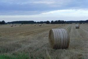 Traktor vs. Pferdestärke vs. Menschenkraft? 3