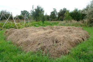 Neues Beet ohne Umgraben anlegen 6