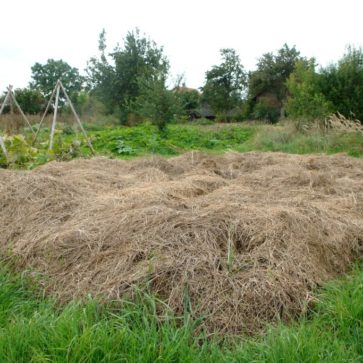Neues Beet ohne Umgraben anlegen