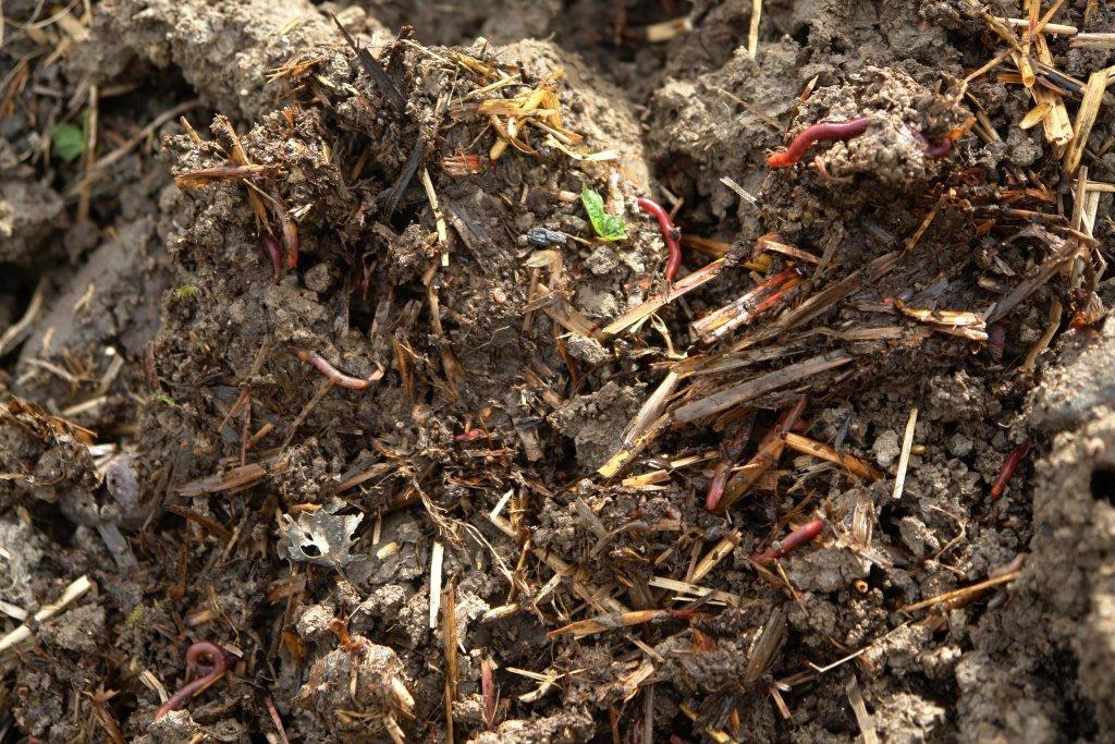 Neues Beet ohne Umgraben anlegen 4