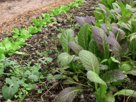 Asia-Salate 2
