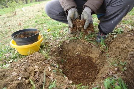 Obststräucher pflanzen 3