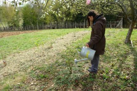 Obststräucher pflanzen 10