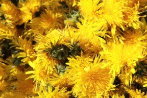 Der gelbe Wunderpuschel 6