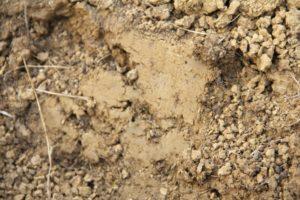 Bodenverbesserung im Gemüsegarten 2