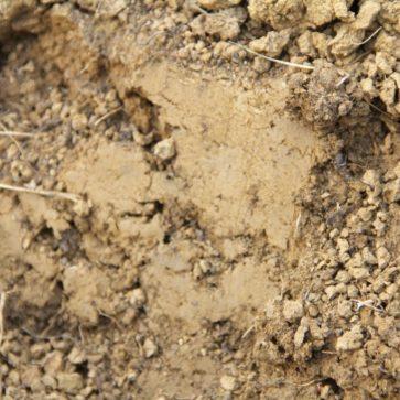 Bodenverbesserung im Gemüsegarten