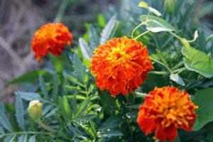 Fotosafari durch unseren Garten 19