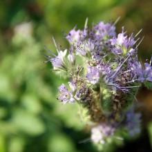 Fotosafari durch unseren Garten 7