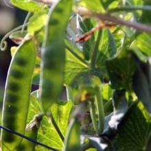 Fotosafari durch unseren Garten 14