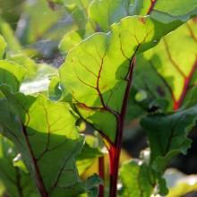 Fotosafari durch unseren Garten 15