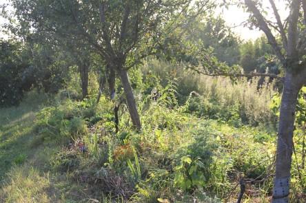 Obstbaumlebensgemeinschaften im Waldgarten 2