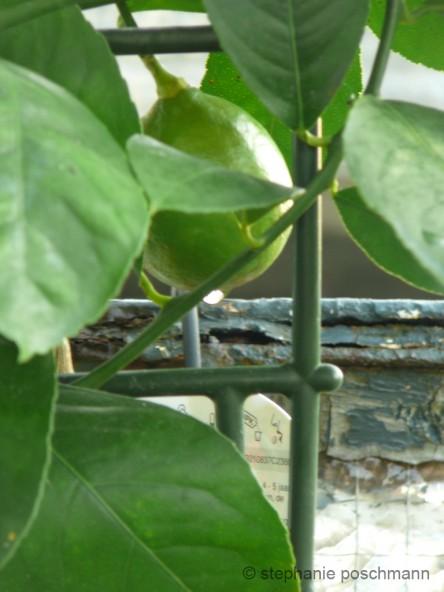 Spätsommer auf dem Balkon (August/September) 22