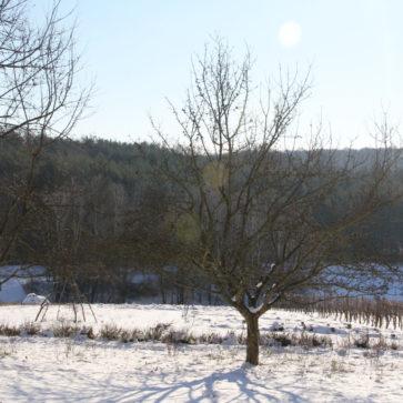 Gemeinschaftsfindung, Winteranfang und andere Baustellen
