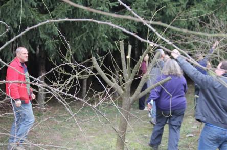 Radikal zurück geschnittener Pfirsichbaum