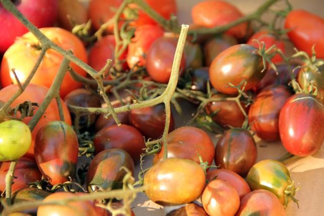 Foto von roten, nachgereiften Tomaten.
