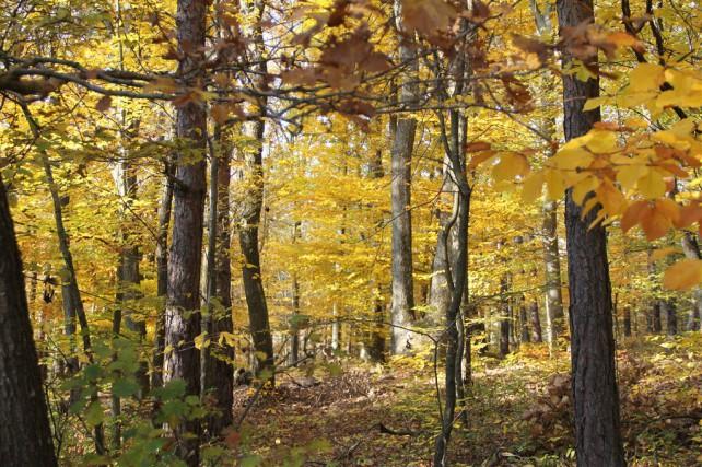 Foto des Waldes hinter unserem Haus im November