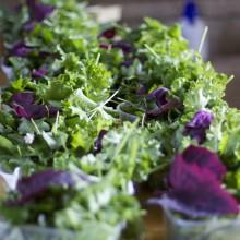Foto von Roter Melde, Gemüsemalve und Buchweizenblättern