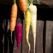 Foto von vielfarbigen Karotten