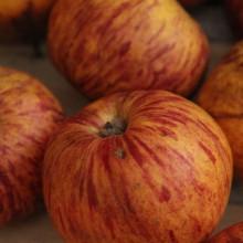 Nahaufnahme von Äpfeln.