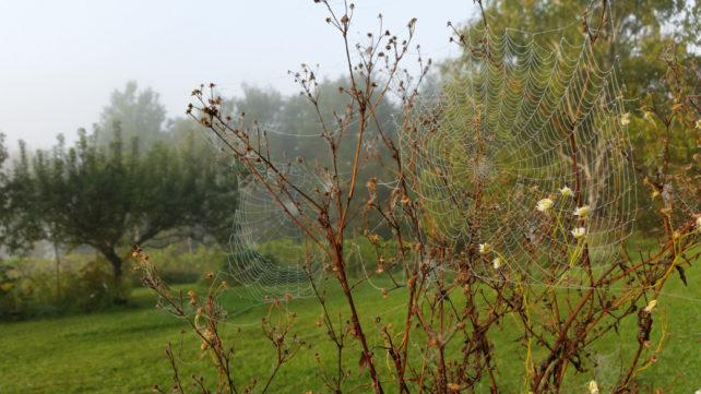 Foto eines Spinnennetzes im Tau