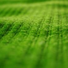 Unser Gründach mit Pflanzenkläranlage 1