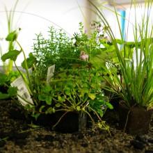 Unser Gründach mit Pflanzenkläranlage 3