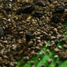 Unser Gründach mit Pflanzenkläranlage 2