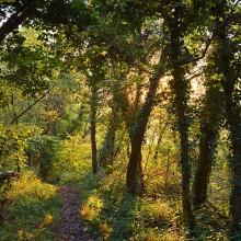 Bild mit einem grünen, sonndurchtränkten Waldgebiet