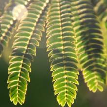 Foto von Blättern gegen das Sonnenlicht.