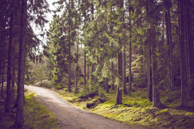 Foto eines Weges, der sich durch einen Wald schlängelt