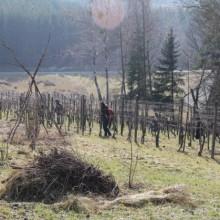 Das schnittige Weingartenkollektiv! 3