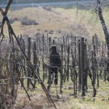 Das schnittige Weingartenkollektiv! 2