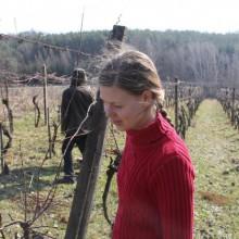 Foto von junger Frau im Weingarten