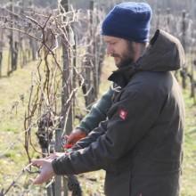 Foto von Jürgen, wie er Wein schneidet
