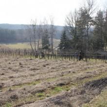 Das schnittige Weingartenkollektiv! 1