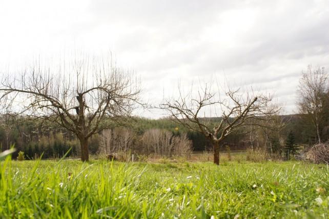 Foto von geschnittenem Apfelbaum