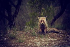 Foto von einem Fuchs