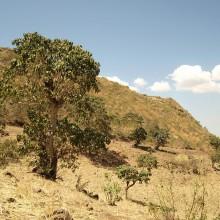 Von Selbstversorgung, Oliven und Gemeinschaft in Äthiopien 1