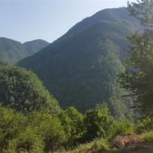 Foto eines ausblicks auf bewaldte Bergänge.