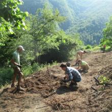 Foto von mehreren Menschen beim Arbeiten auf einem Feld