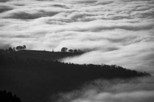 Schwarz-Weiß-Foto einer Waldlandschaft im Nebel