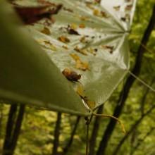 Abgefallenes Laub auf einer Plastikplane.