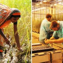 Gegenüberstellung von zwei Fotos: Bäuerin in Indien und Labormitarbeiter von Bayer CropScience
